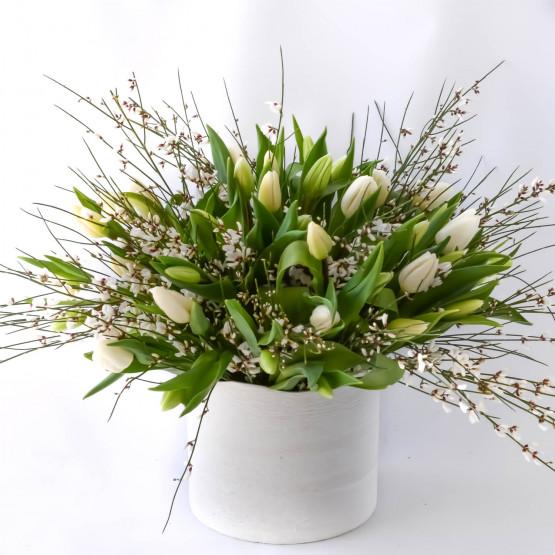 Tulip Galore