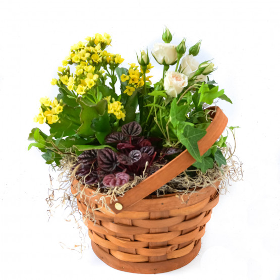 Simple and Sweet Dish Garden