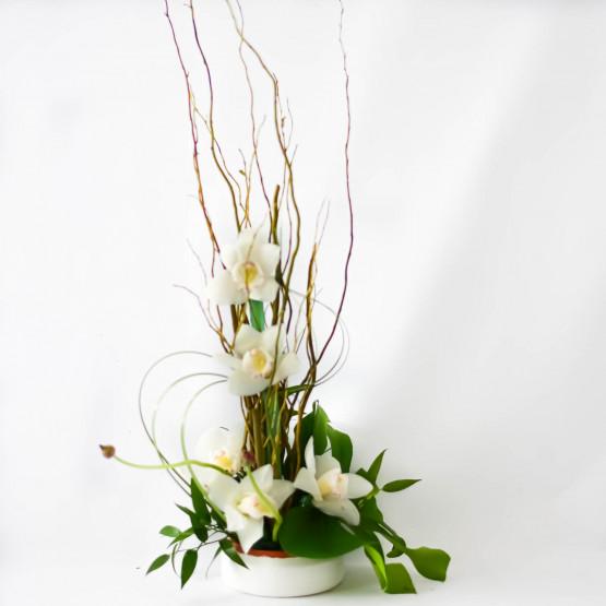 Orchid Zen